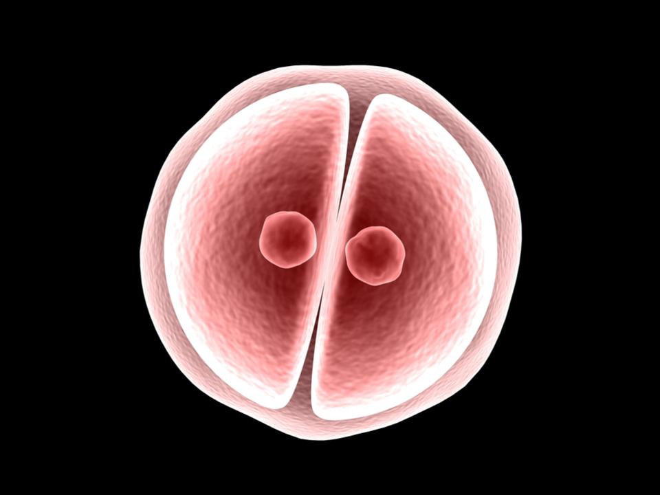 25年前に凍結された受精卵から赤ちゃんが生まれる