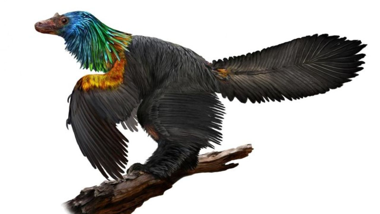 中国で発見! 首元が鮮やかなレインボーの恐竜
