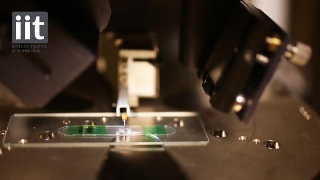 イタリア工科大の研究者が開発。スマホを顕微鏡に変えるレンズ「BLIPS」を使ってみた