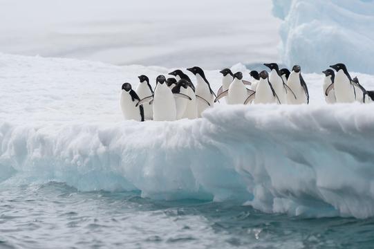 大寒波襲来…雪道で転ばない歩き方は?