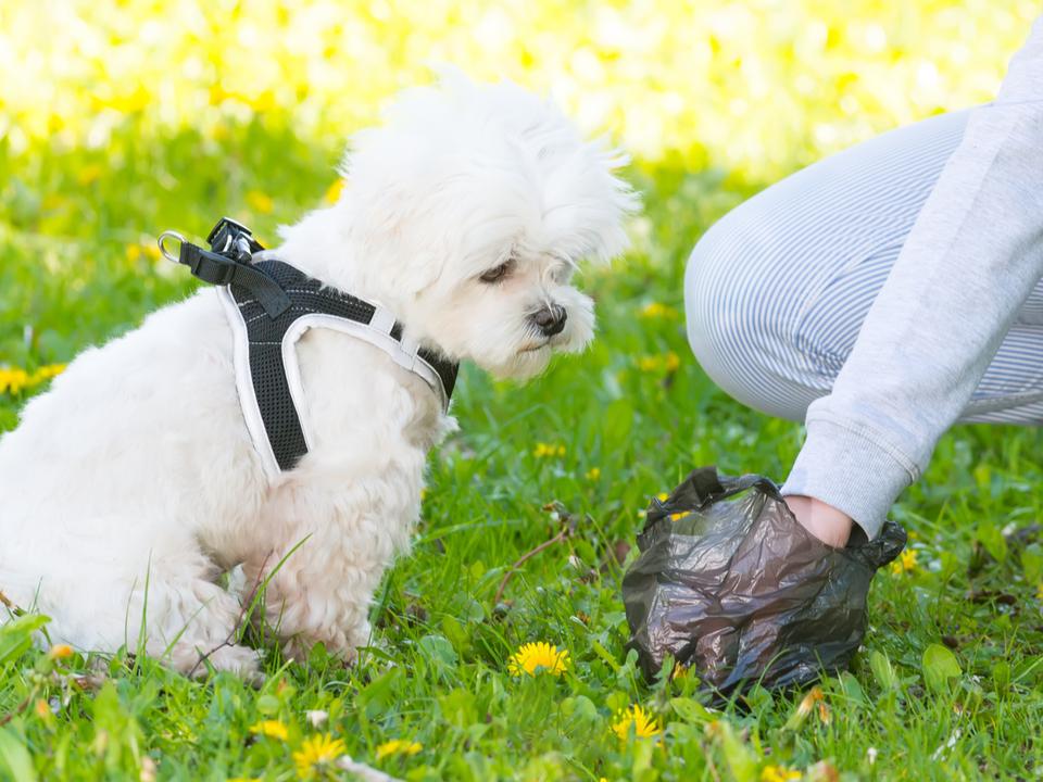 なぜ犬はウンコを食べちゃうのか