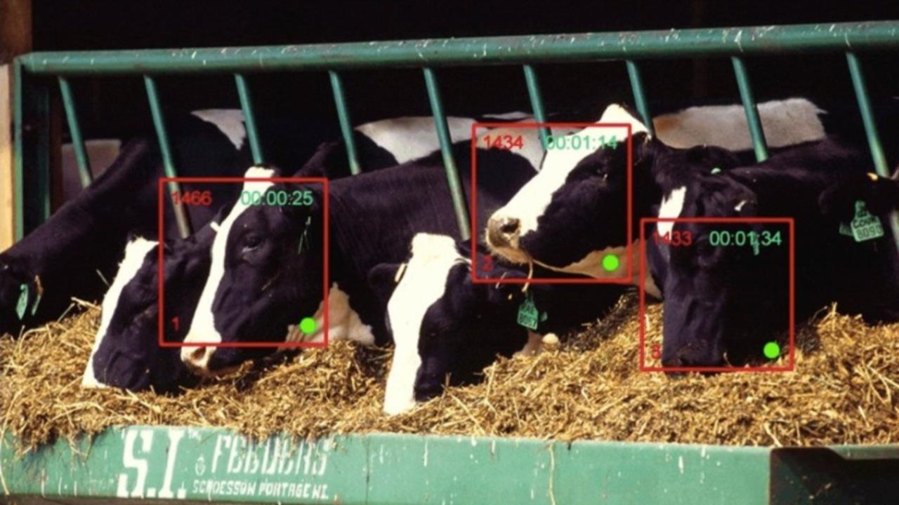 ついに、牛の顔認証が始まろうとしている。でも何に使う?