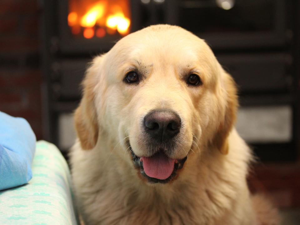 犬のつまみ食いが原因であやうく火事に。それを止めたのはスマート火災報知器
