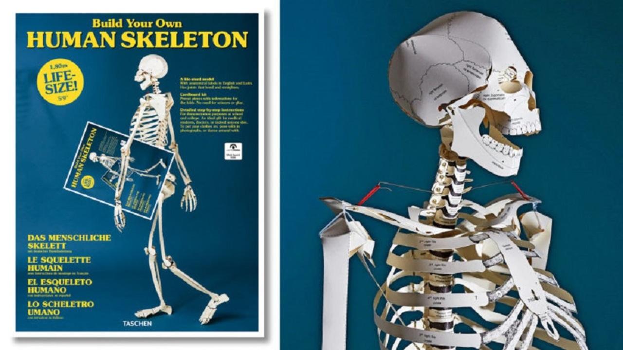 楽しみながら骨の名称を覚えられそう! 実物大の人体骨格模型を作れるペーパークラフト本