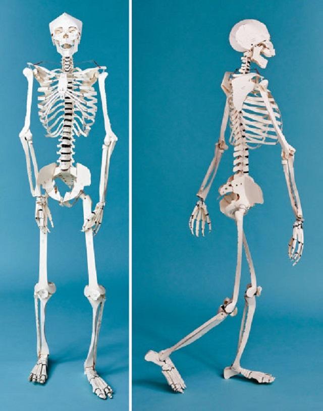 楽しみながら骨の名称を覚えられそう! 実物大の人体骨格模型を作れるペーパークラフト本 | ギズモード・ジャパン