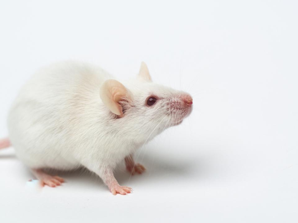 動物実験をゼロへ。未来の新薬開発に期待高まる、薬の作用をコンピュータ・シミュレーションする研究