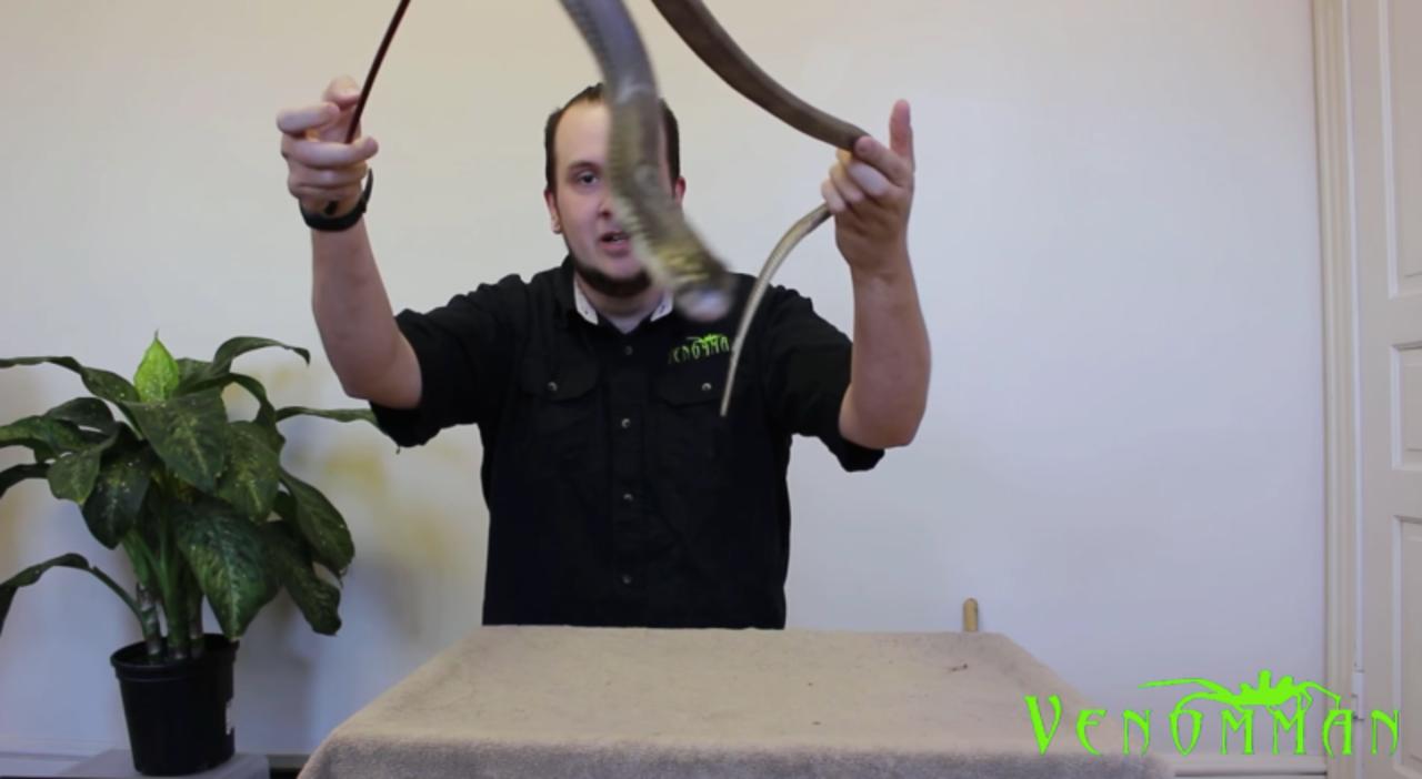 YouTuber、動物園から毒ヘビを盗んで撮影して逮捕される