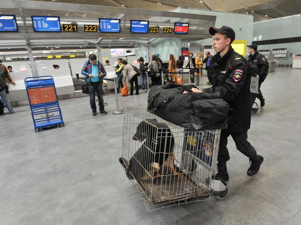 ユナイテッド航空、今度はカンザスに届けるはずの犬を日本に届けてしまう