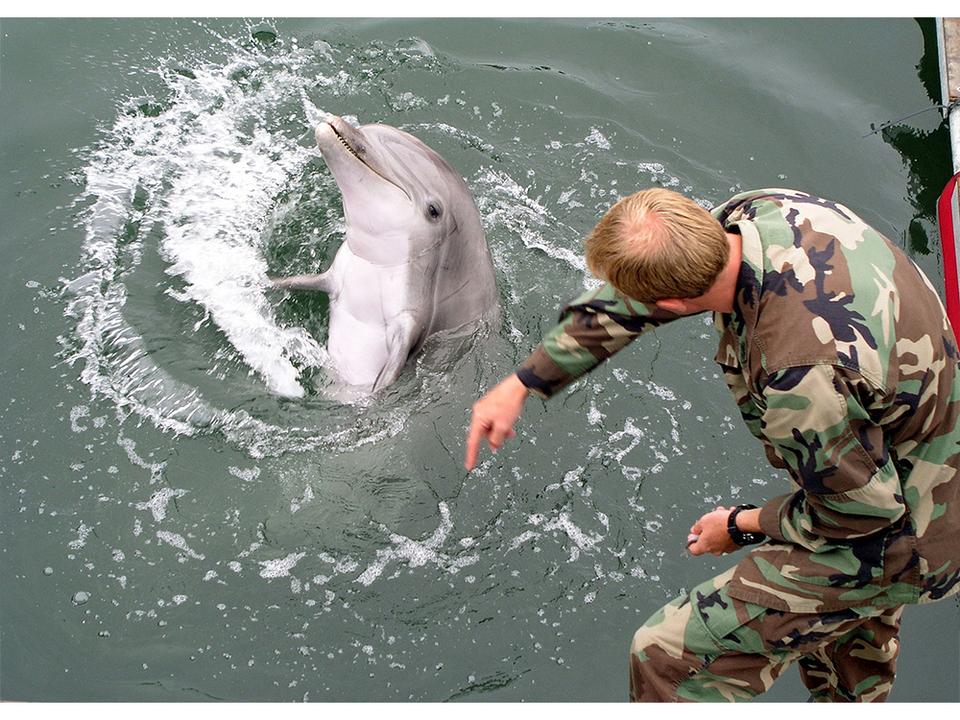 イルカたちによる「漁場荒らし」が地中海で問題に