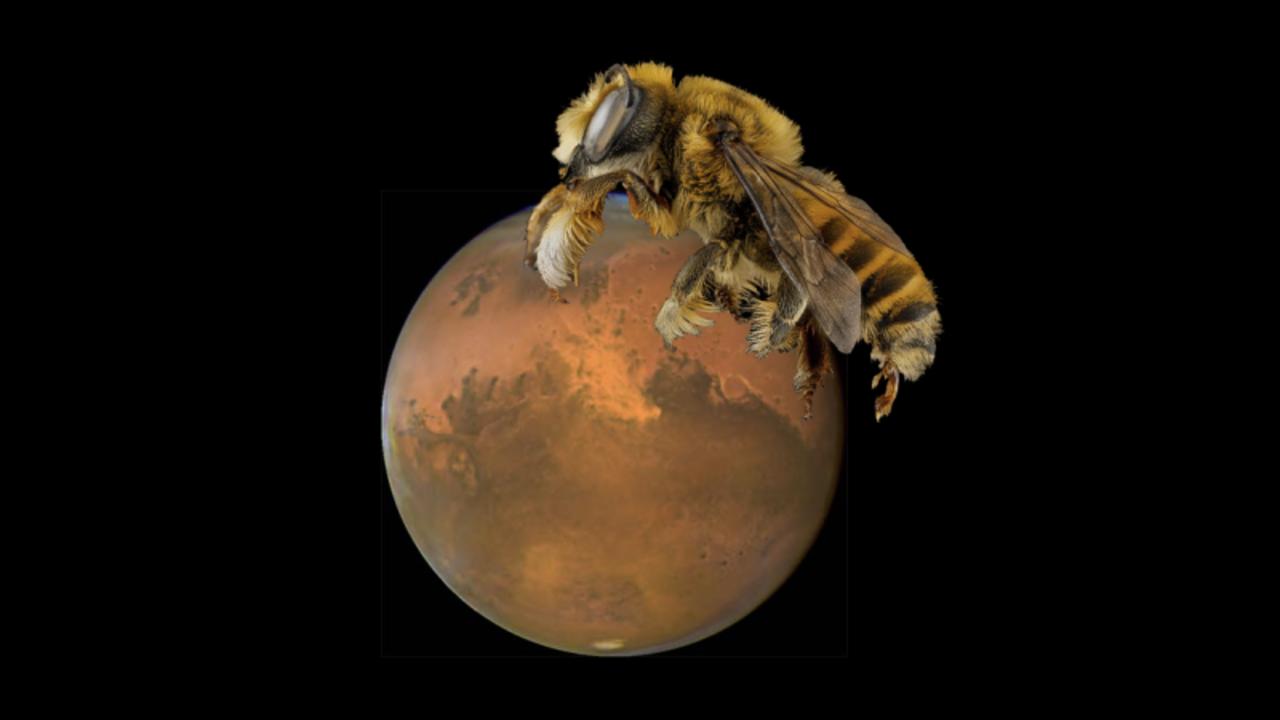 ぶーーーん。NASAの次のアイディアは火星で飛ばせるハチ型ロボット