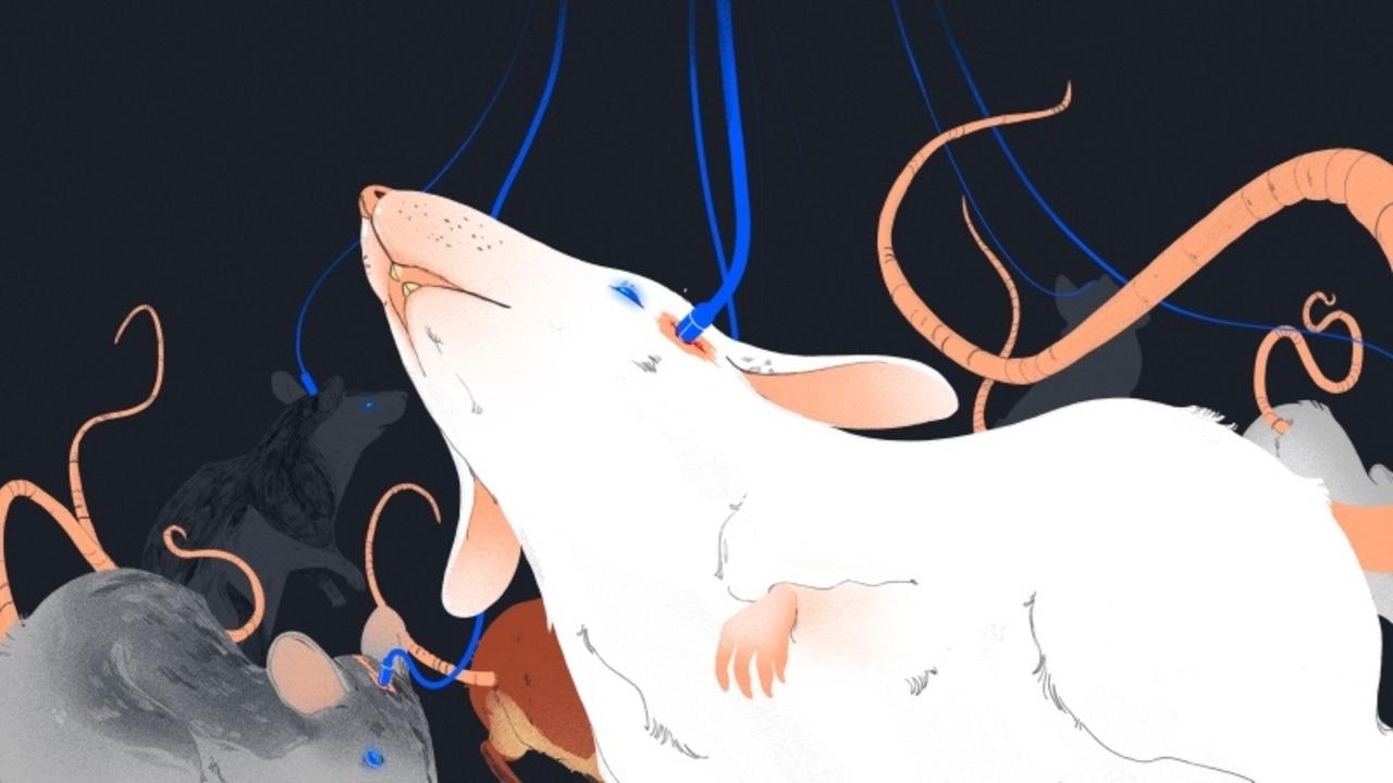 謎につつまれたイーロン・マスクの「テレパシー技術」スタートアップ、動物実験開始か