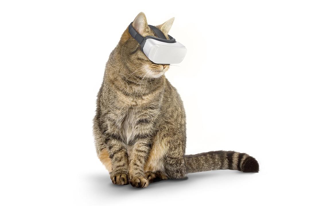 猫専用VRが、秘められし野生を解き放つ