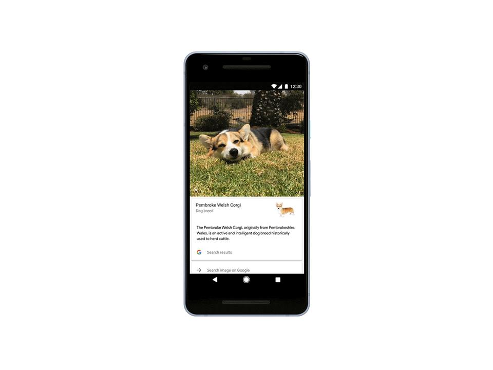 Googleの画像認識技術、人間の次は、犬を見分けるように