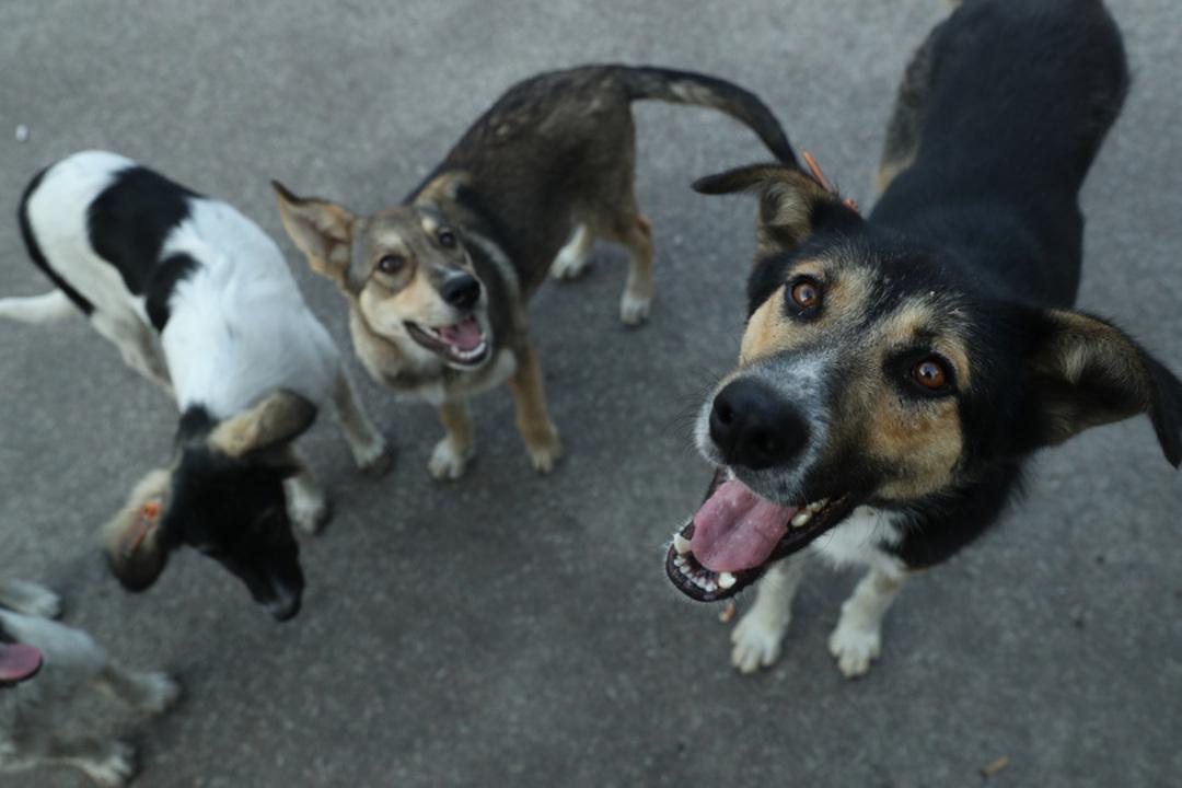犬を怖がっている人ほど犬は噛み付くと判明