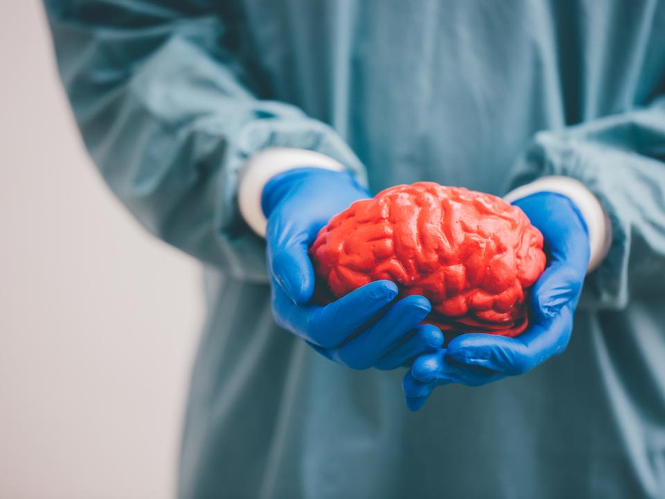 """イェール大学、身体から切り離された脳を36時間""""生かす""""ことに成功"""