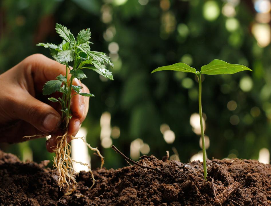 地上で受けたストレスを地下で伝達。植物どうしのコミュニケーション方法とは