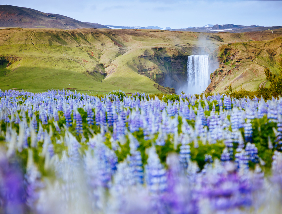 アイスランドで脱獄し国外逃亡した男、あまりの居心地の良さに刑務所へ戻りたがる