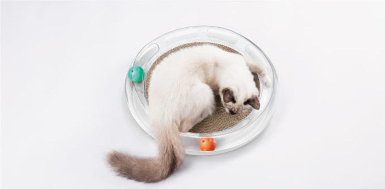 ネコを夢中にさせる数々の仕掛け。猫用おもちゃ「FUN 4 in 1 CatScratcher」のキャンペーンが残り3日