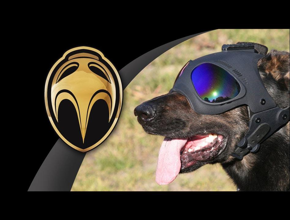 犬専用ミリタリーヘルメット、かわい…カッコよすぎるので我が家の番犬にも装備したい