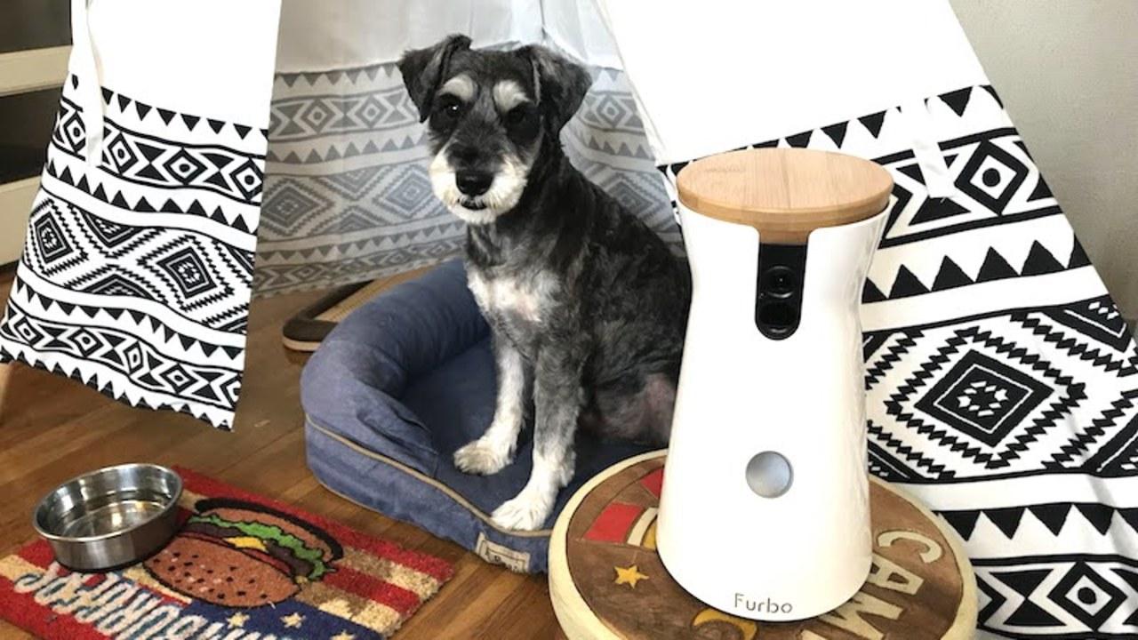 【読者限定で2,000円オフ】スマホ連携で愛犬と遊べるドッグカメラ「Furbo」を実際に使ってみた、これならお留守番も安心だね