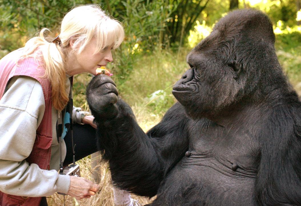 ありがとう。手話のできるゴリラ、Kokoが亡くなる
