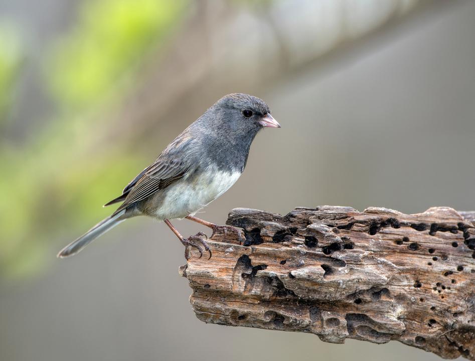 実家出る出ない問題が命を繋ぐ。鳥の親子も巣立つタイミングで駆け引きしてるらしい