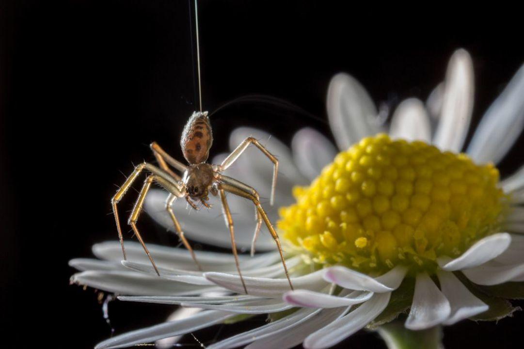 翼がなくても飛べるんです。クモは風と電場を操って大空に舞う