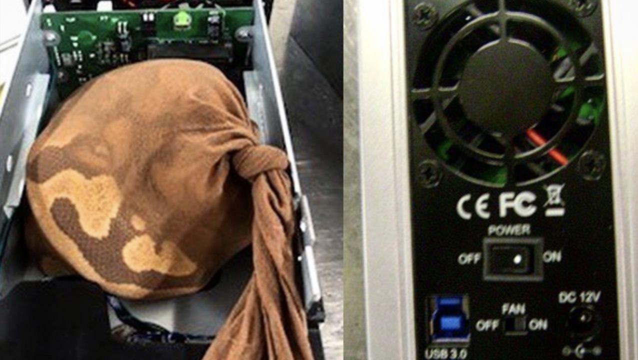 空港のセキュリティーはHDDケースに入れられたヘビもちゃんと発見できる模様。ふー、よかった…?