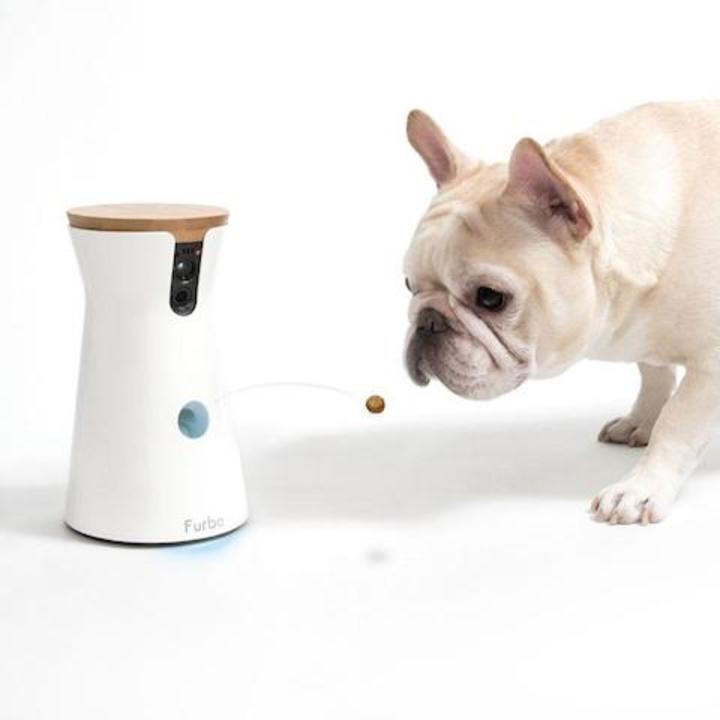 【夏のPrimeWeekセール】ドッグカメラ「Furbo」がお買い得に。外出先からでも愛犬とコミュニケーションをとろう
