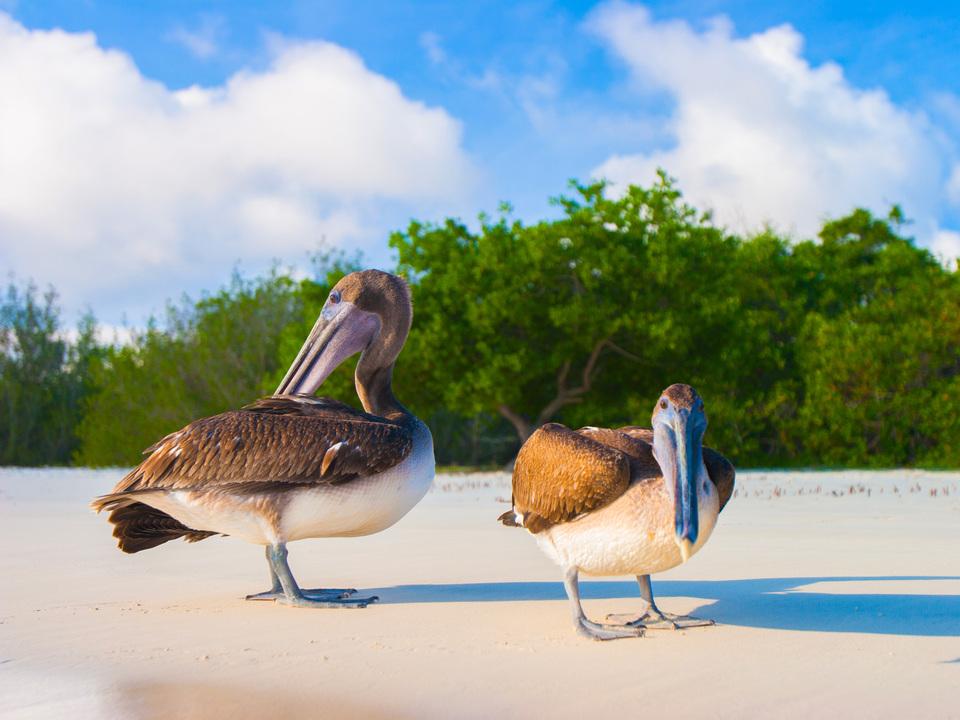 サンゴ礁を元気にしてくれる妙薬…それは海鳥のウンコ