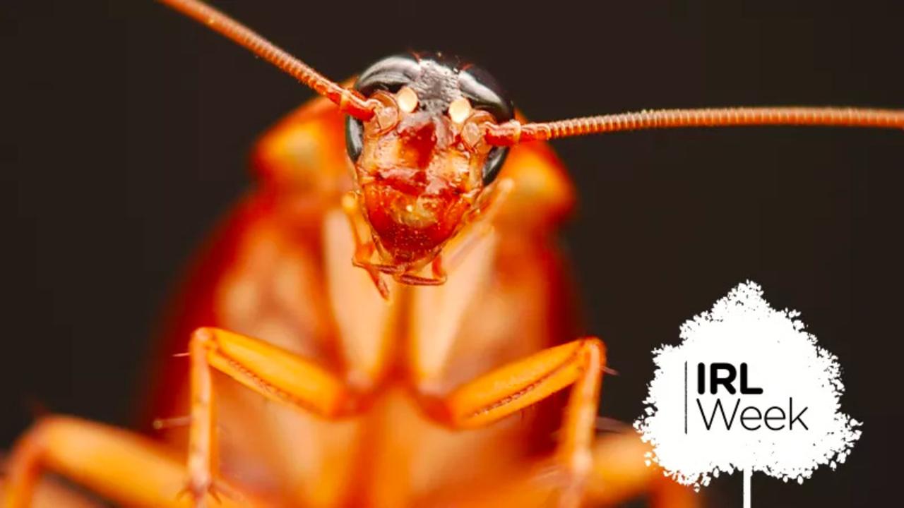 ゴキブリを退治する最適(&最悪)な方法