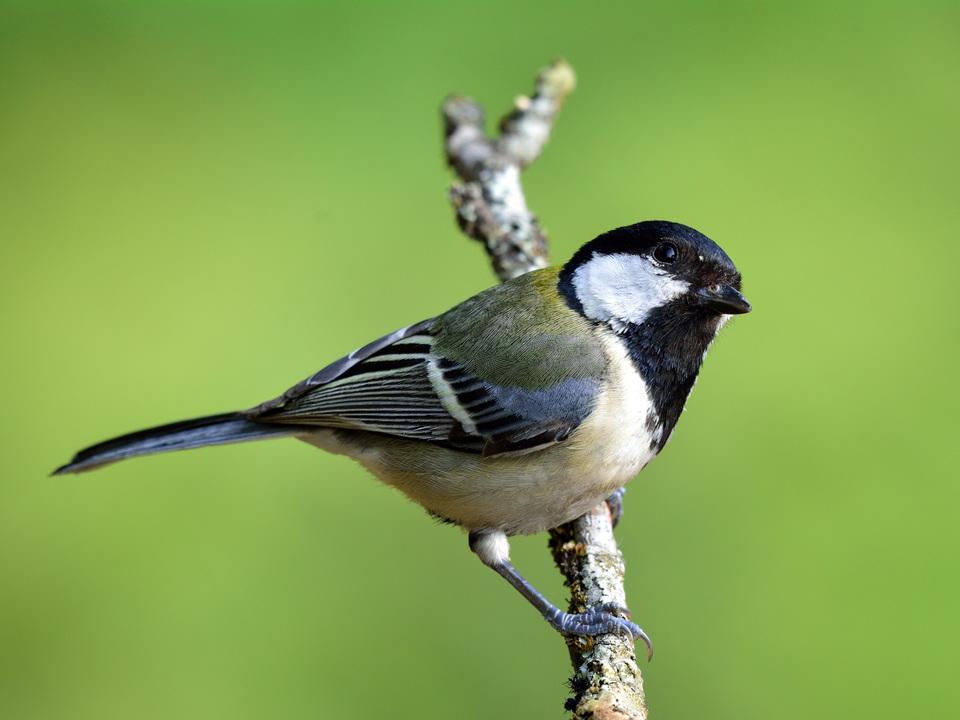 この可愛らしい小鳥は「透明」を理解できる