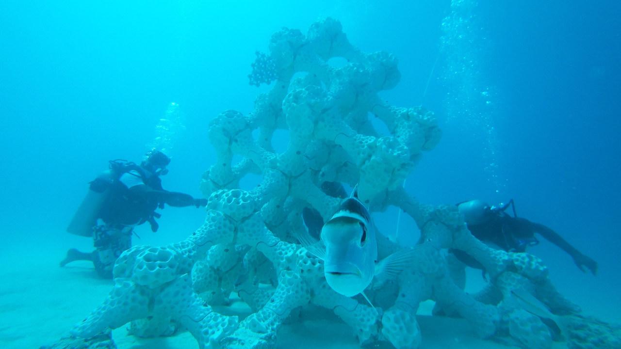 世界最大級、3Dプリントの人工サンゴ礁をモルディブの海へ