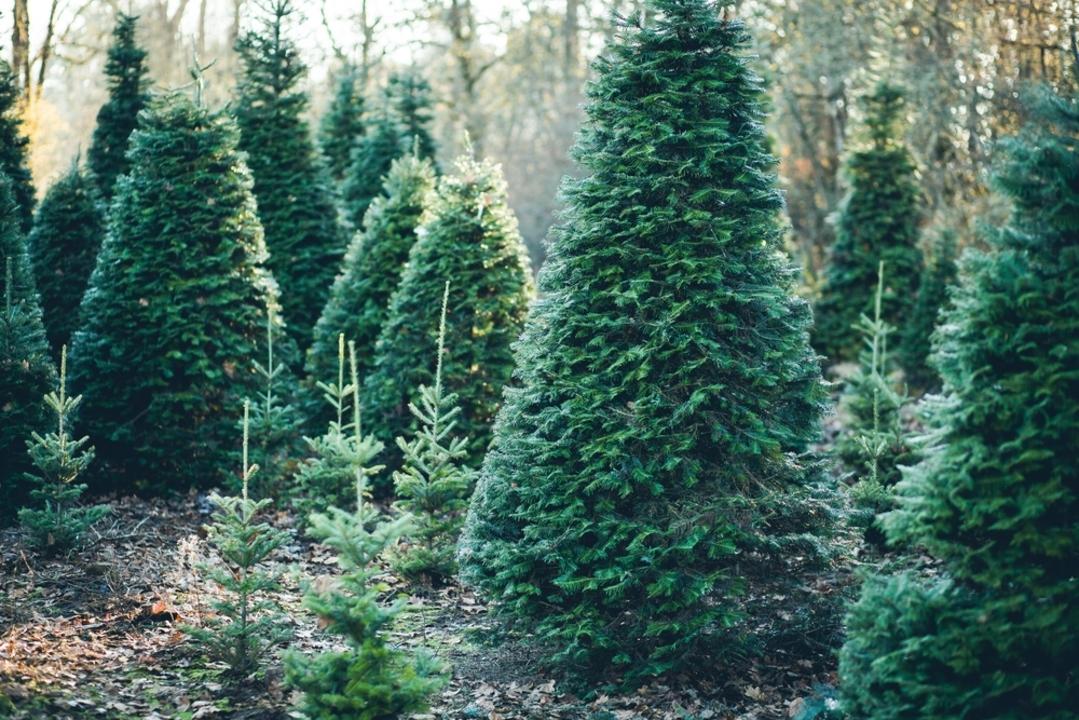 高さ2メートルのクリスマスツリーはAmazonのダンボール箱に入ります