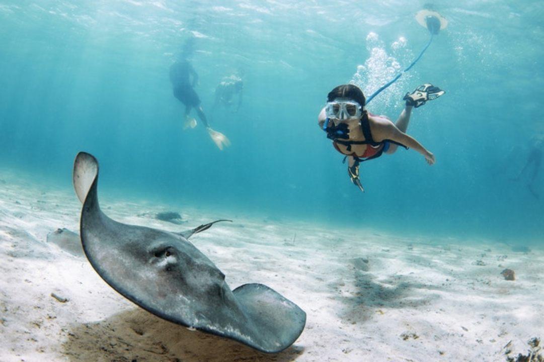 酸素ボンベ不要。水上からホースで空気を送るダイビング・ギア「NEMO」
