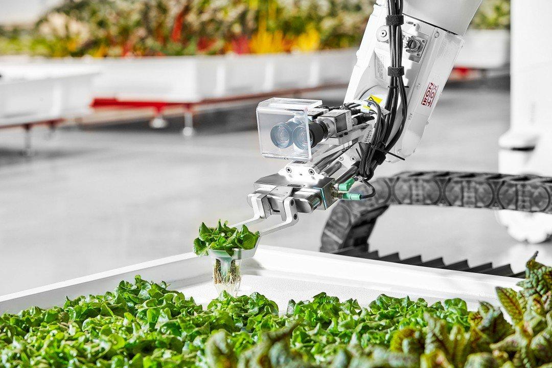 効率化で収穫量はふつうの畑の5倍。初の全自動農園から溢れる未来感