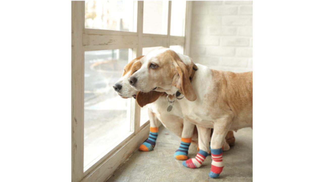専門店と獣医師がつくった犬用靴下! すべりづらい&老犬の負担が軽減されそう