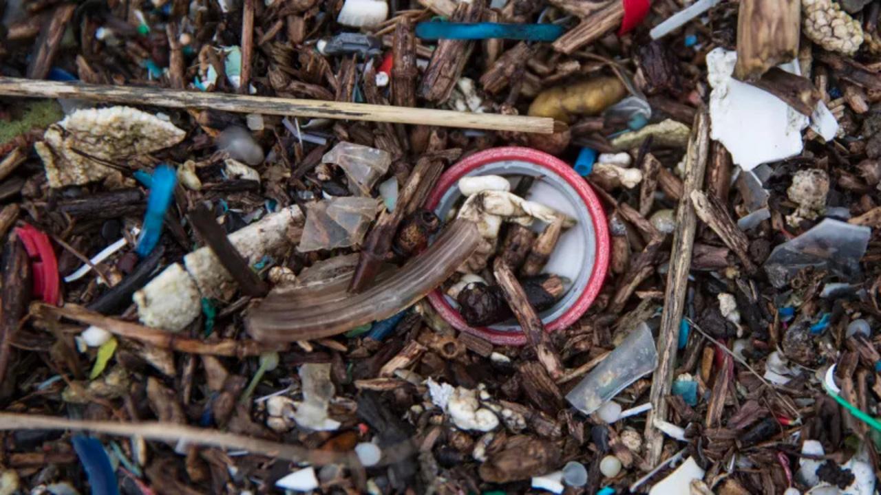人糞からもマイクロプラスチックが検出されたけど、とりあえず落ち着け