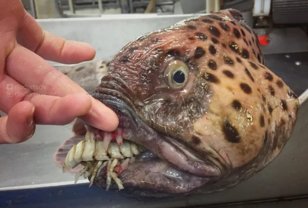 出っ歯! ギョロ目! 口から何か出てる! 地獄の漁師によるエイリアン深海魚の悪夢
