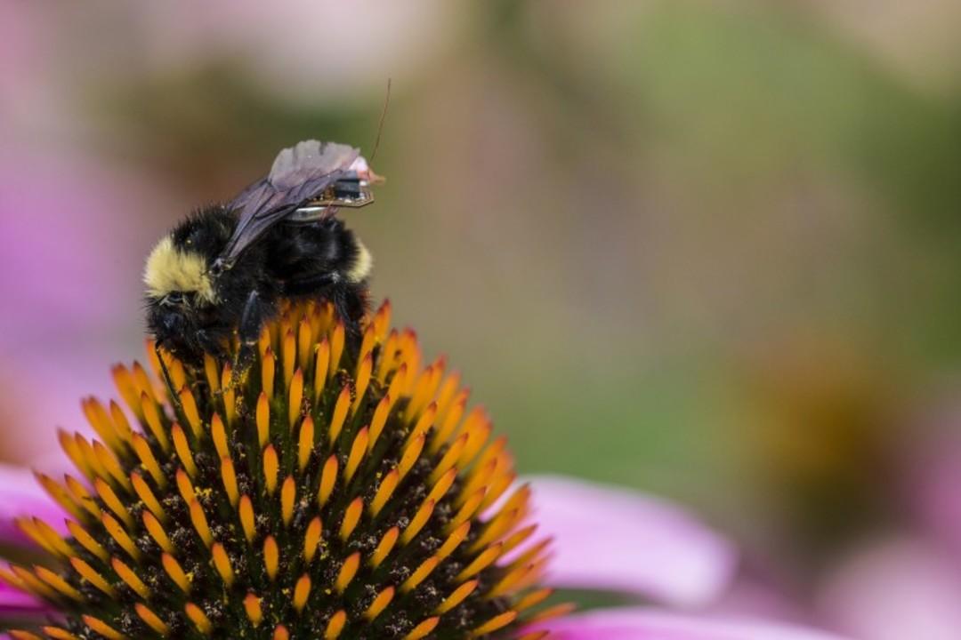 ミツバチに超小型センサーを載せてスマート農場を作ろう