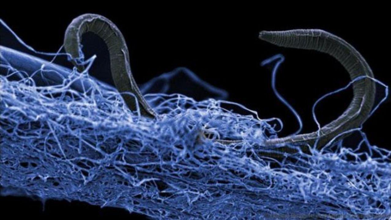 地下深くのアチアチで高圧な地層にトンデモナイ数の生命体がいました