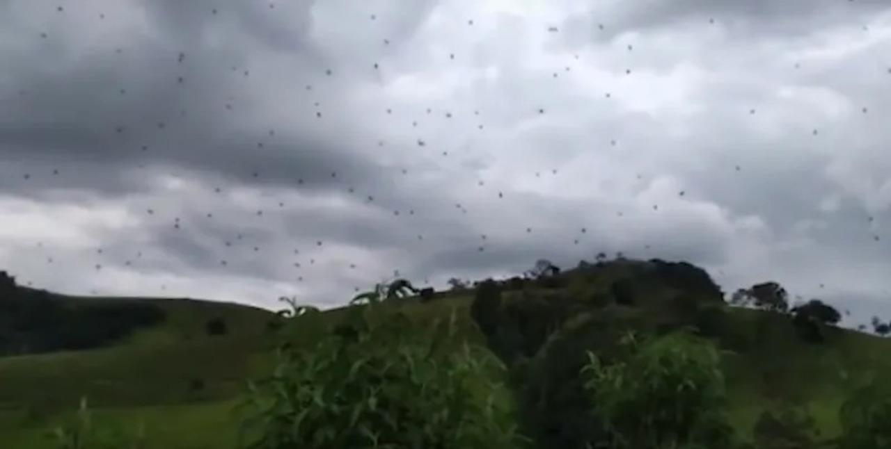 恐怖! 空一面が「蜘蛛」という地獄がブラジルにて発生