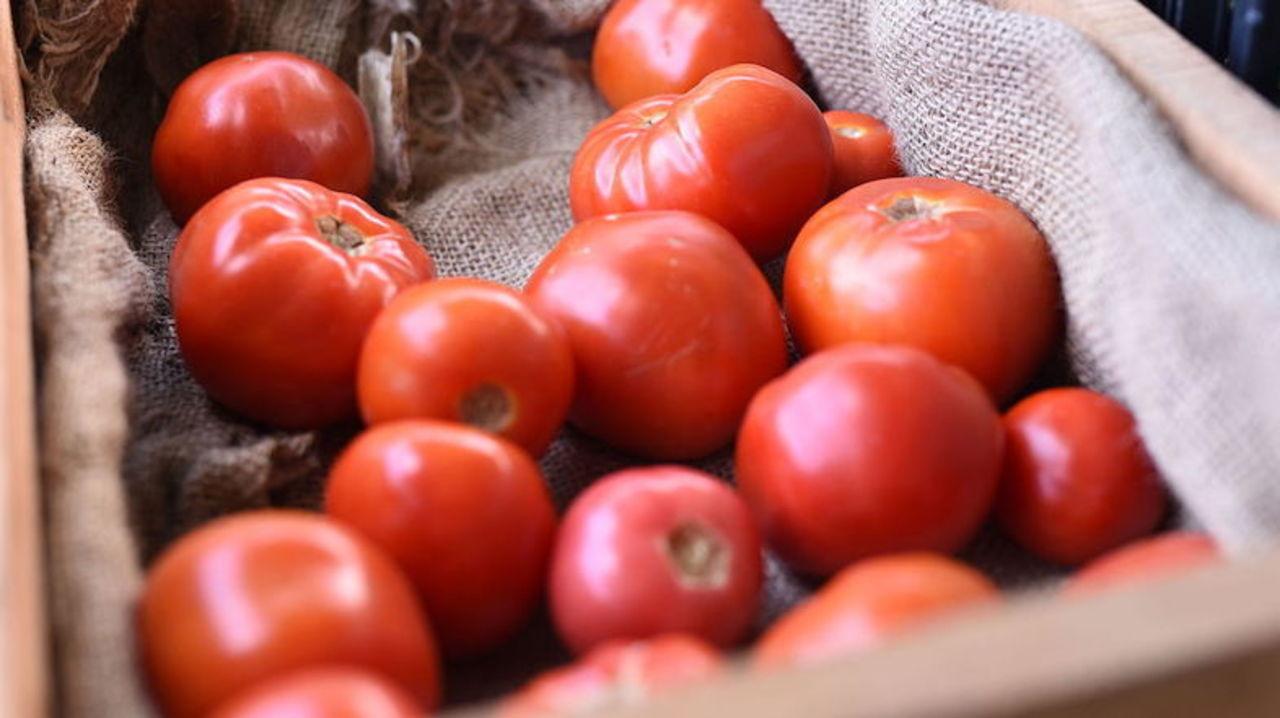科学者は言った「辛いトマトを作ろう!」