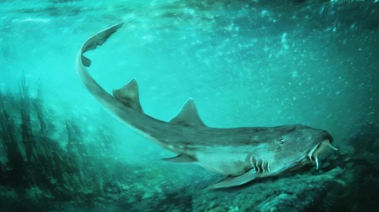 白亜紀のサメ、懐ゲー『ギャラガ』の名を授かる