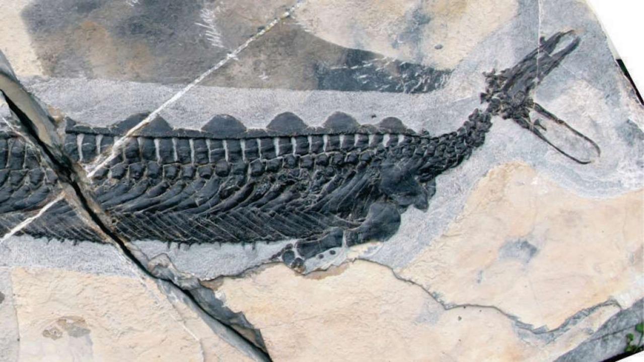 中国発:謎だらけ! アヒルみたいな頭の海洋爬虫類の化石が見つかる