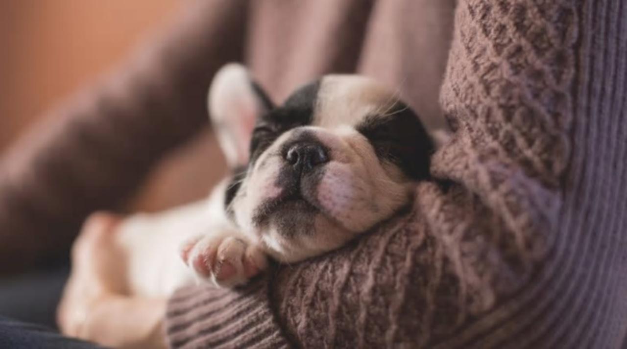 大人になっても揺りかごで眠る…と頭が冴えるらしい