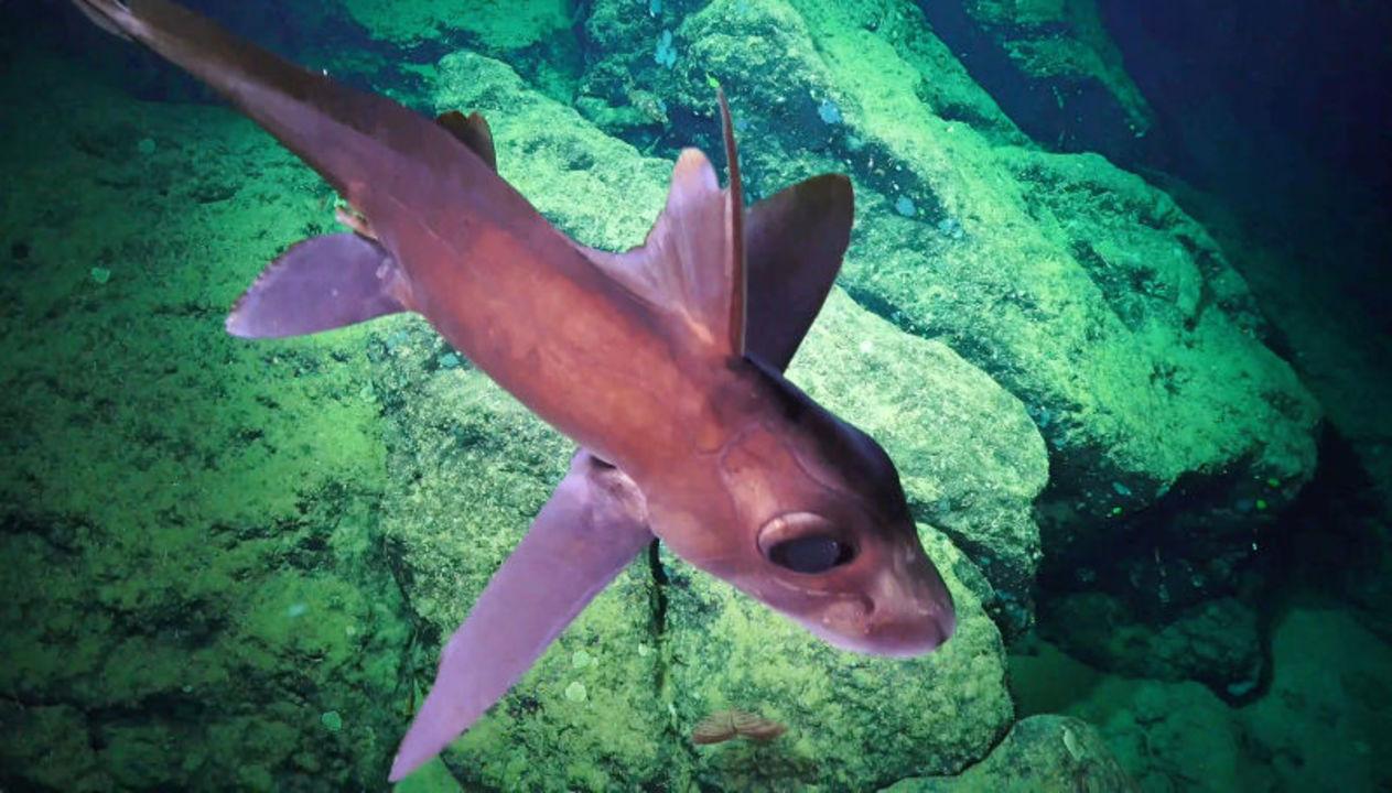 深海に住まうエイリアンたちの不気味で鮮やかな画像集