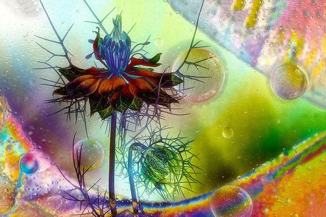 まるで『不思議の国のアリス』の世界のよう。植物写真の受賞作品集