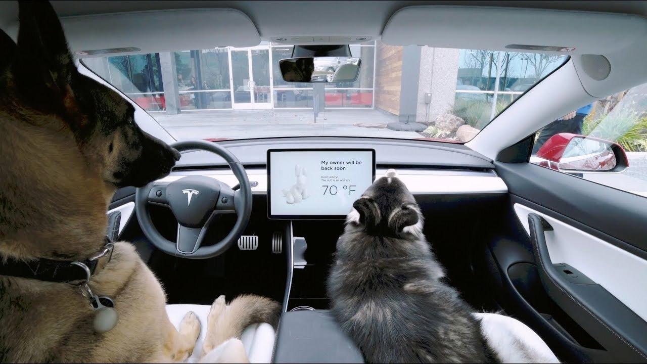 車内で留守番するワンコを快適に。Tesla車に「ドッグ・モード」を実装