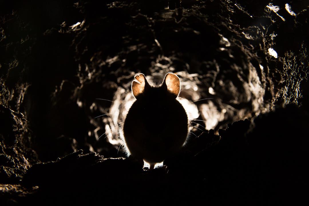 映画『ディパーテッド』のネズミをCGで消すクラウドファンディングを募るも、別の誰かがソッコーで消しちゃった